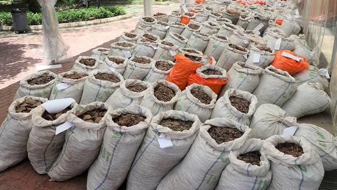 http://www.thestandard.com.hk/breaking-news/section/4/125594/Singapore-pangolin-scales-haul-world